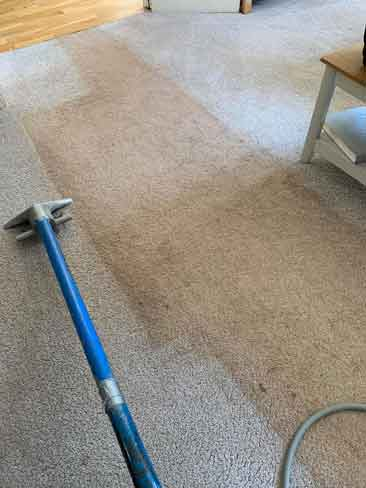 Cleaning a dirty carpet with Bane-Clene tool at Abbotskerswell