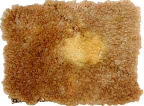 Clorox bleached out carpet