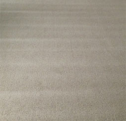 Carpet Roll Crush marks appear as wide bands across the carpet width